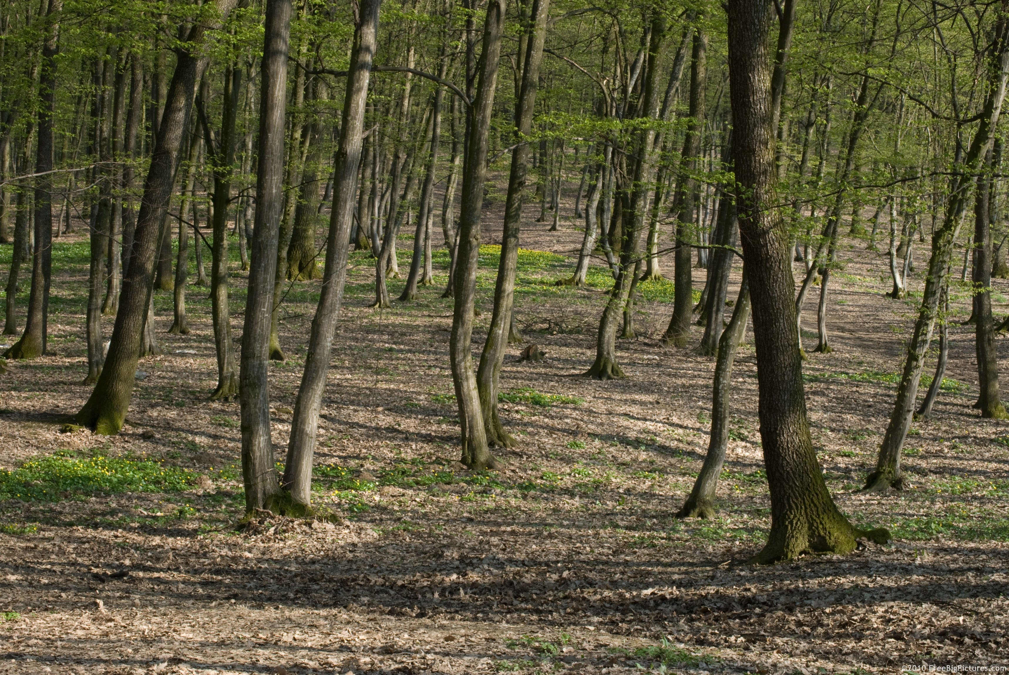 Headquartered in hot springs, arkansas, the forest is managed for multiple uses, including timber and wood production, watershed protection and improvement, habitat for wildlife and fish species (including threatened and endangered ones), wilderness area management, minerals leasing, and. Forest Plants Freebigpictures Com