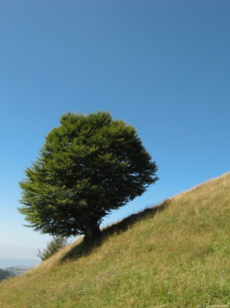 Image of Lonely and Old Tree on Grassland