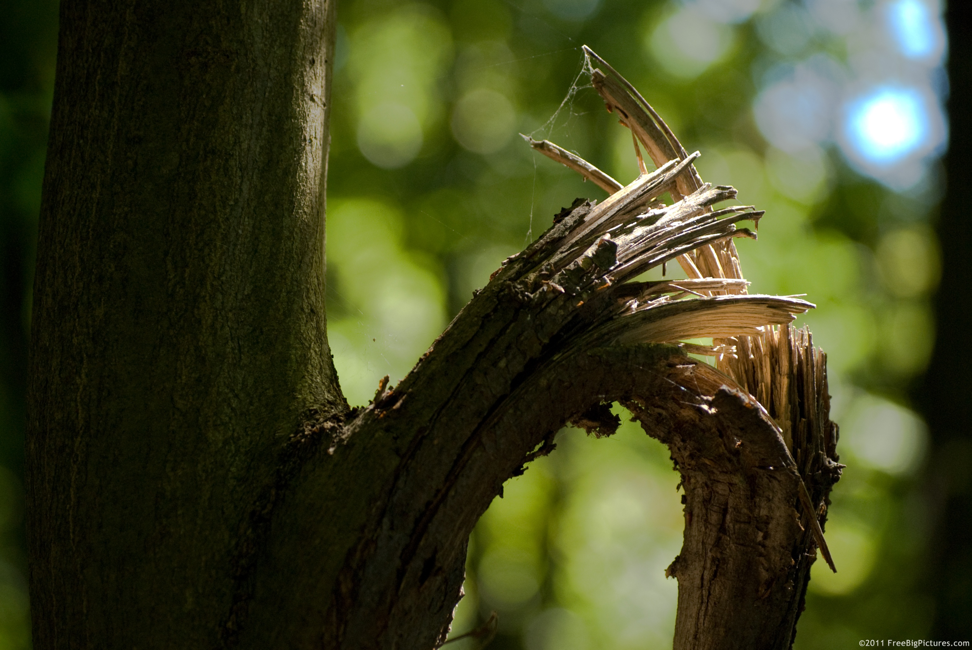 Image result for broken branches