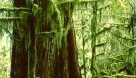 Vandana Shiva – Decolonize the Mind