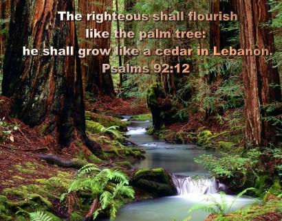 BIBLE VERSED (2)