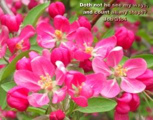 BIBLE VERSED (6)