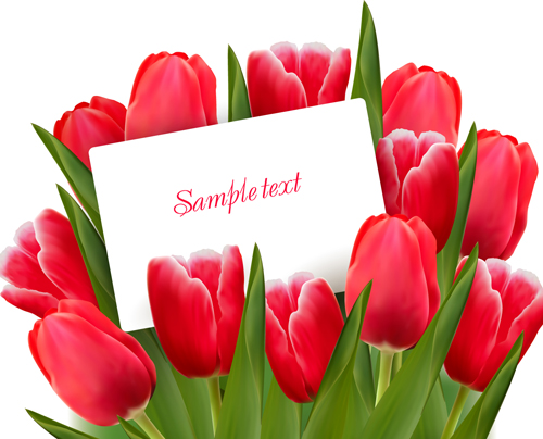 Set of Color Tulips Cards design vector 01  Vector Card