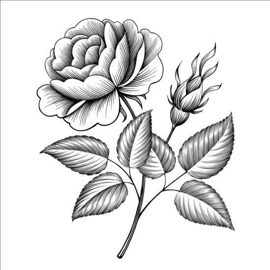 Vintage rose engraving template vector free download