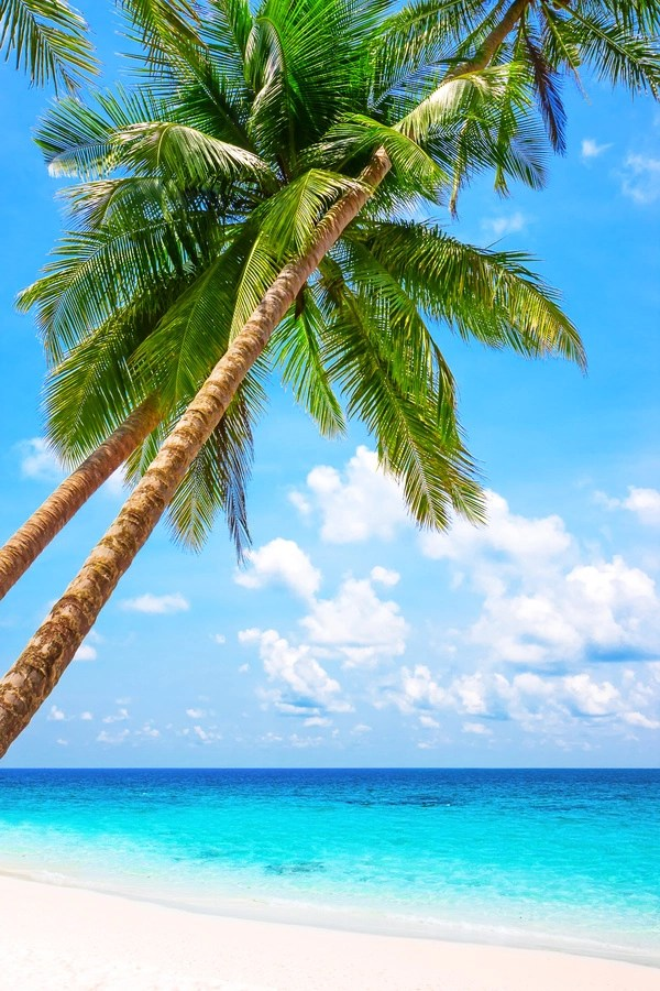 3d Emoticons Wallpapers Blue Sea And White Beach Coconut Trees Free Download