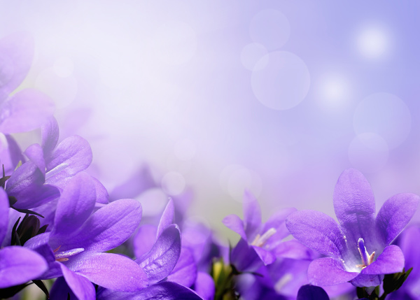 What Is Falling Action Of The Yellow Wallpaper Beautiful Purple Flower Hd Picture Free Download