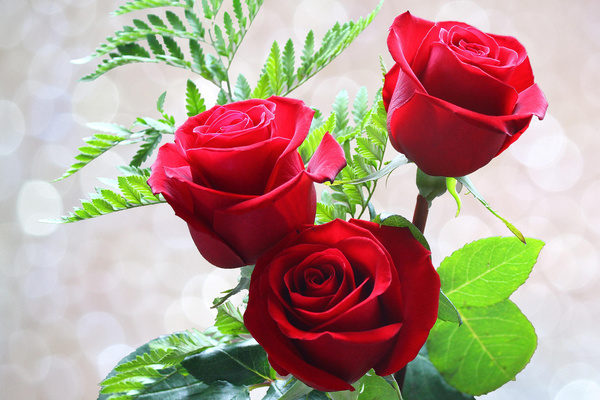 green leaf red roses