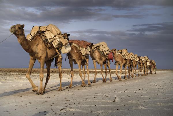 Emoticons Cute Wallpaper Camel Caravan In The Desert Stock Photo 02 Animal Stock