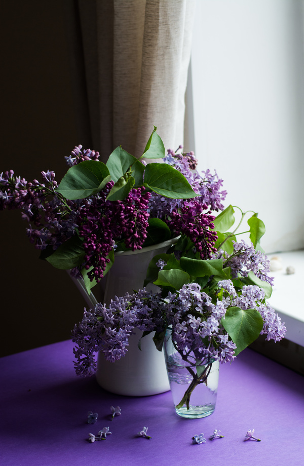 3d Girl Wallpaper Download Violet Flowers Decoration In Room Stock Photo Flowers