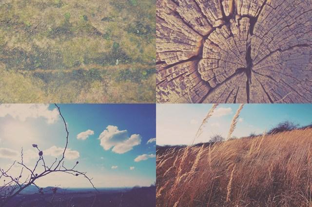 12-free-nature-photos