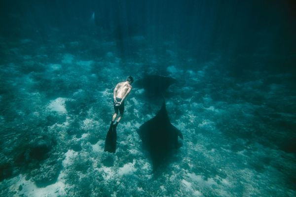 Freedive Trips with Freedive Bali