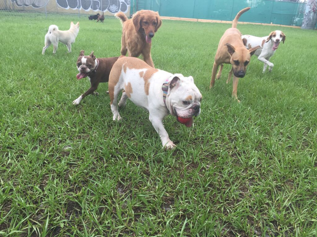 Best Dog Boarding In Miami