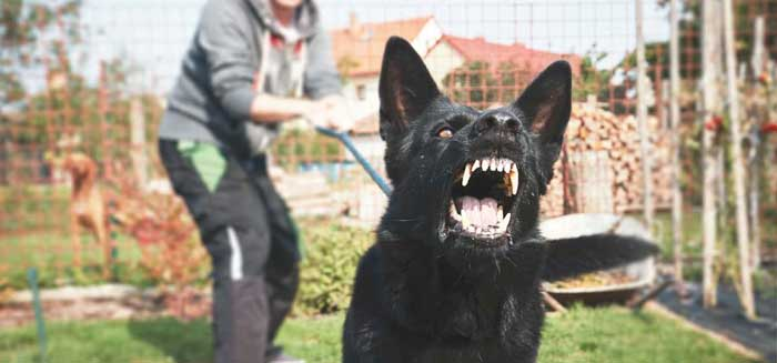 How to Stop Dog Aggression Quickly and Easily