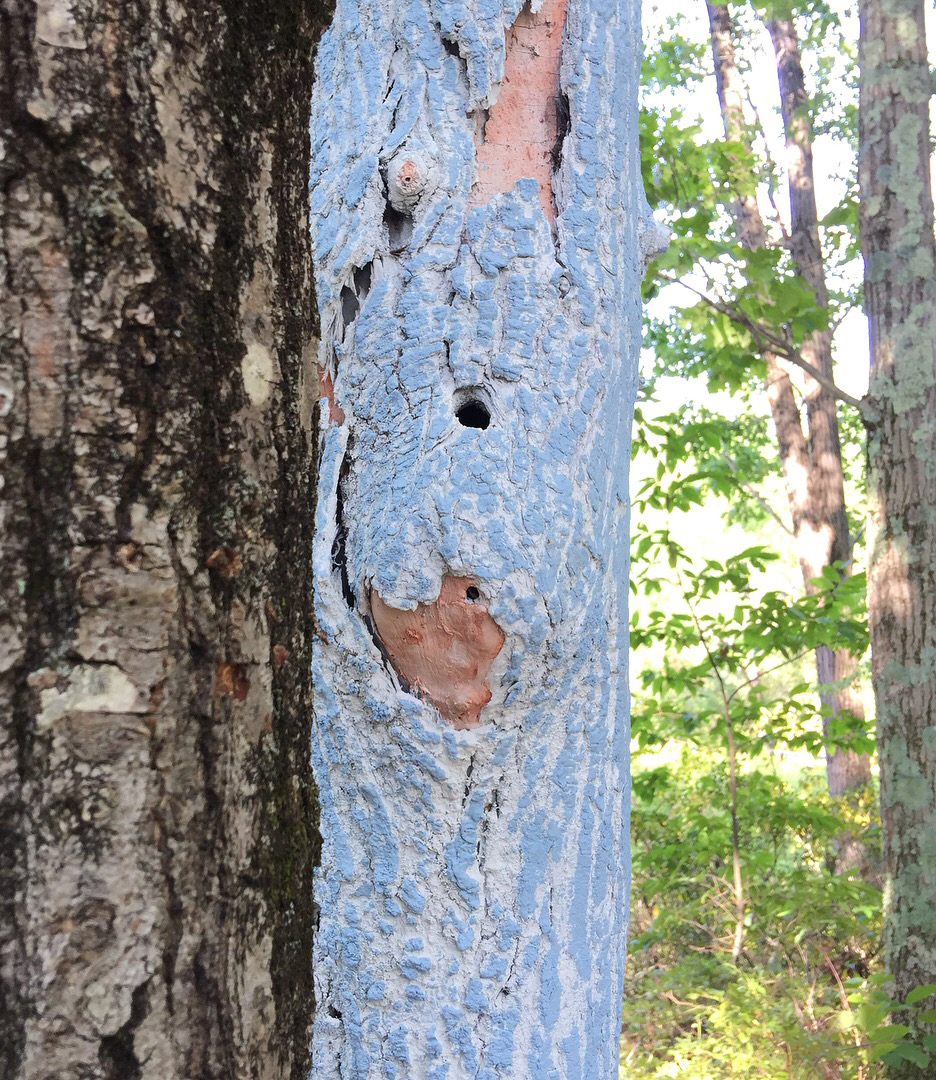 Close-up of Graft, 2017. Freedom Baird. Living oak tree, dead ash tree trunk, latex and acrylic paint, acrylic bead blanks, plywood, 4x4s, plastic sheeting, moss. Harvard, MA