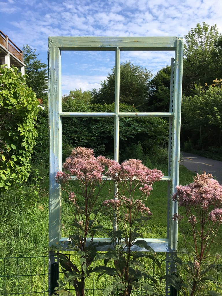 Window with Joe Pye Weed — Eupatorium hybrid, detail of Room to Grow, 2019. Freedom Baird