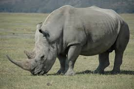 America has a RINO Problem on National Security