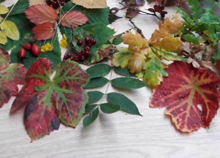 Autumn display nature