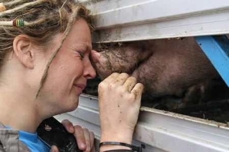 help farm animals by exposing their plight