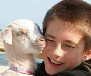boy hugging baby goat cropped