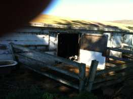 The Calf Shed