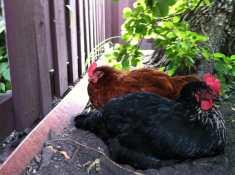 Danita and Doris enjoying an afternoon nap in the shade.