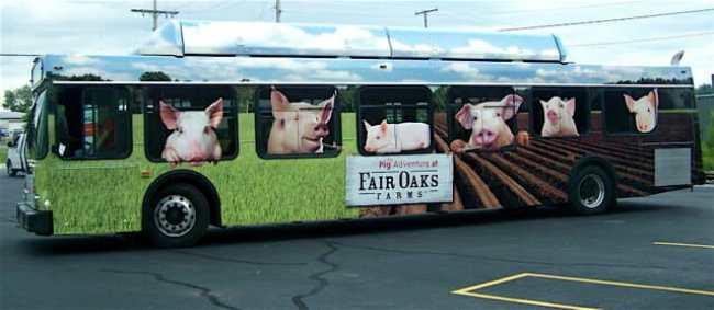 Pig Adventure Bus 2