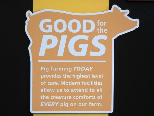 Fair Oaks Farm Pig Adventure