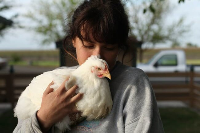 Backyard Chickens Expanding Our Understanding Of Harm