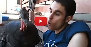 Turkey Talk Between Bird and Human Will Blow Your Mind