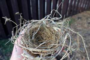 The Fallen Nest