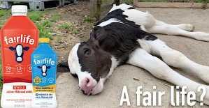fair oaks farms dairy