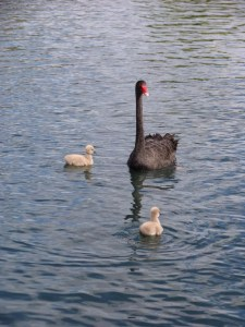Transformation. From ugly duckling/sinner to beautiful swan/child of God