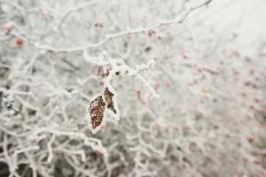 Leaves under ice crystals