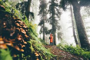 Woman with backpack walk through forest with fern leaves at the sunset.