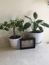 jade plant in bathroom.