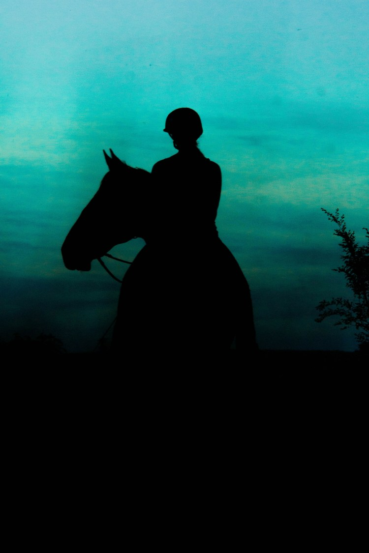 Silhouette of Horse in Evening