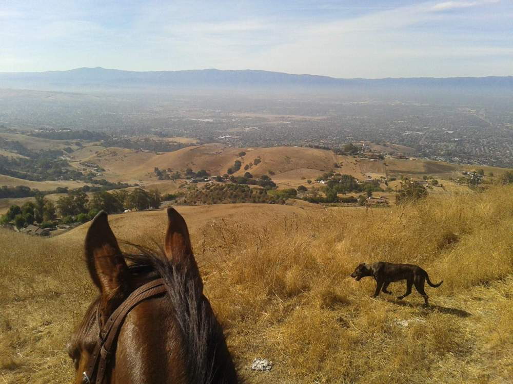 View from horseback while trail riding.