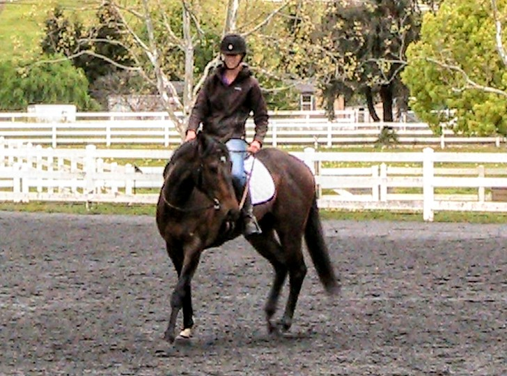 Yielding the Hindquarters on a Green Horse