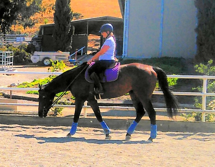 Student Riding Lesson Horse