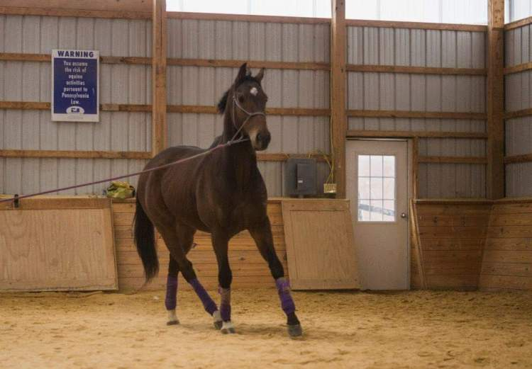 Lunging an Anxious Horse
