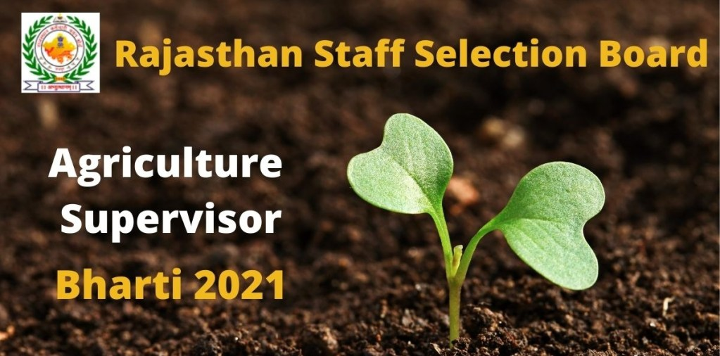 RSMSSB 2021 Vacancy Free Job search