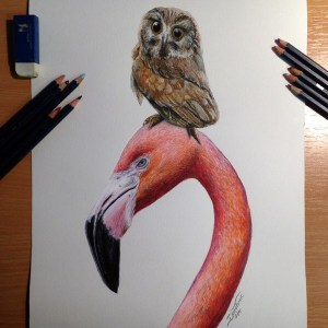 pencil drawings drawing simple creative bird colored atomiccircus friends deviantart inspiration pencils realistic animals source colors