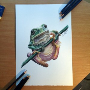 pencil drawings creative frog drawing colored simple realistic coloured pencils dino draw atomiccircus deviantart animal colorful cool sketch animals ink
