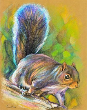 pencil drawings squirrel drawing simple creative sketches animal animals colored pencils lurking mike painting source sketching colors illustration