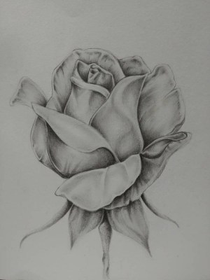 drawing rose drawings flowers easy pencil realistic sketch whimsical flower tattoo roses graphite sketches artistic khwite lucy draw dessin bleistiftzeichnungen