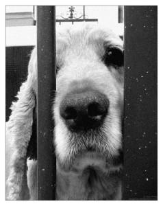 sad-dog[1]