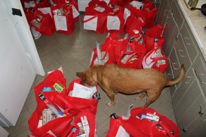 Jazzy Girl Inspects the Shire Sharing Bags, 2015