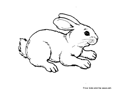 Print out animal rabbit pictures Colouring pages for