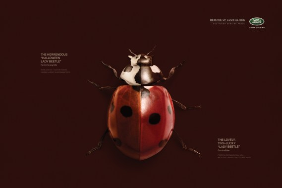 LadyBug copy