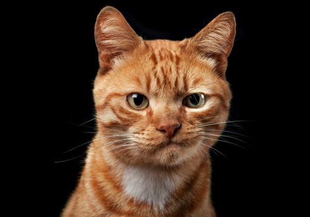 скептический кот